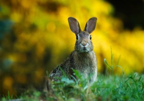 animal-blur-cute-247373
